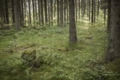 Älvornas skog