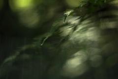 I skogens dunkel